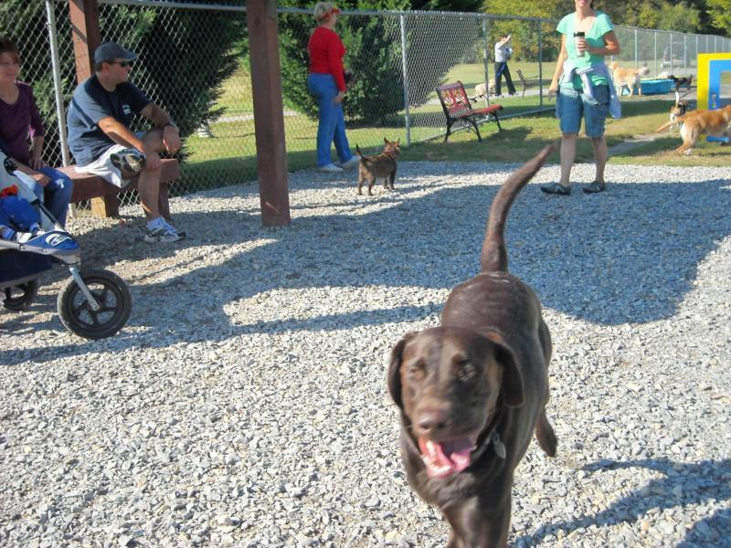 lulu at the dog park