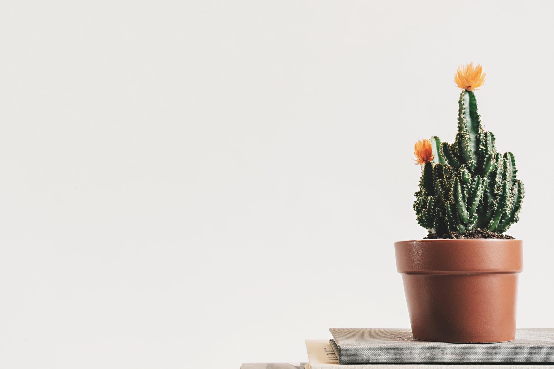 minimalist cactus